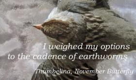 Beattie & Pryputniewicz Thumbelina November Butterfly