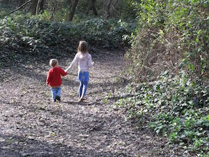 Forest Path Robyn Beattie