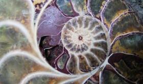 Nautilus Divine Robyn Beattie