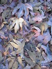 Robyn Beattie Lavender Field of Grief Leaves