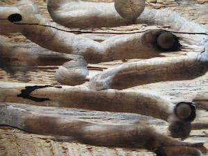 Robyn Beattie wood worms worry