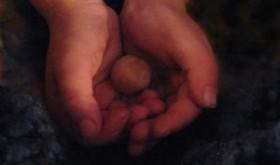 Seed Hands Robyn Beattie
