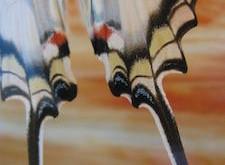 butterfly tails Robyn Beattie