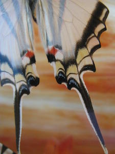 butterfly tails Robyn Beattie