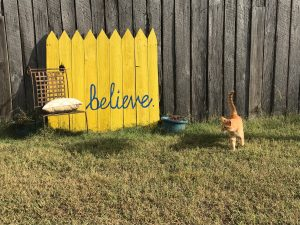 Oliver the orange cat in front of the side building at Rockvale Writers' Colony in front of yellow sign with blue cursive letters that spell believe beside chair and a